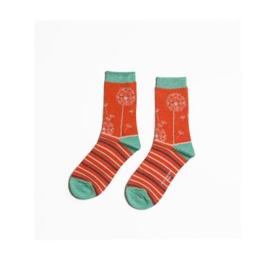Socks (4-7) - Dandelion Clocks-18088 - Orange